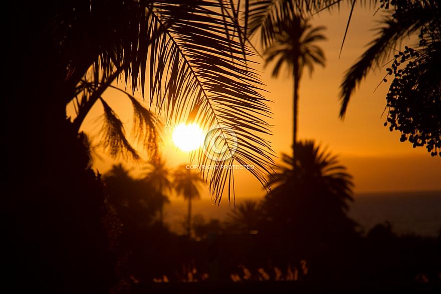 Sunset through palms