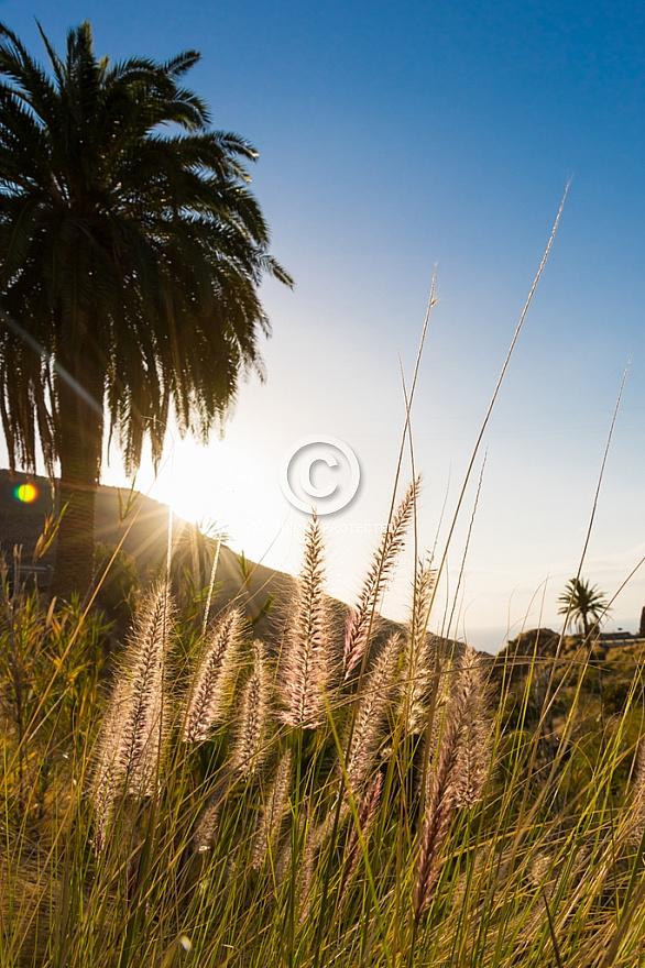 Sunset through the palms at Guayedra