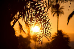 Sunset through palms