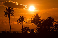 Palms sunset & Teide