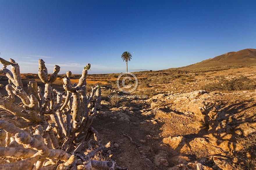 Malpais de la Arena Fuerteventura