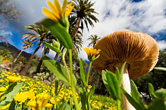 Mushroom, flowers and palm trees in Santa Lucía