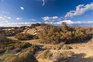Maspalomas Reserve
