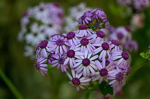 Flowers flores