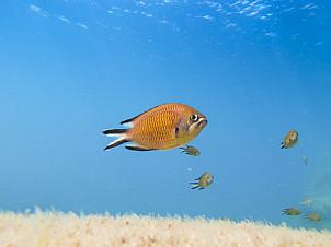 Fish of Gran Canaria