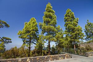 Mirador de Izcagua La Palma