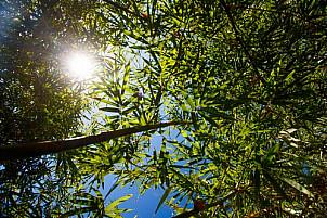 Bamboo sun