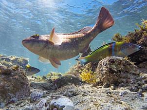 Las Canteras Fish