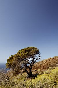 El sabinar - El Hierro