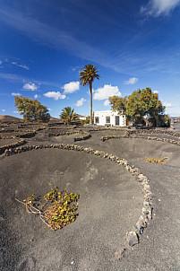 Bodegas Martinón - Lanzarote