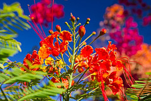 Gran Canaria Flowers