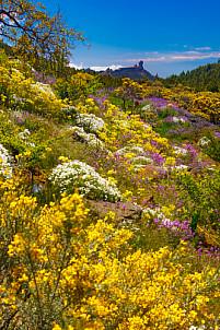 Roque Nublo en primavera