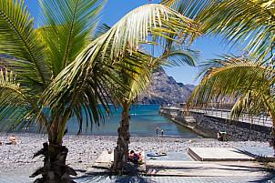 Palms at Puerto de las Nieves