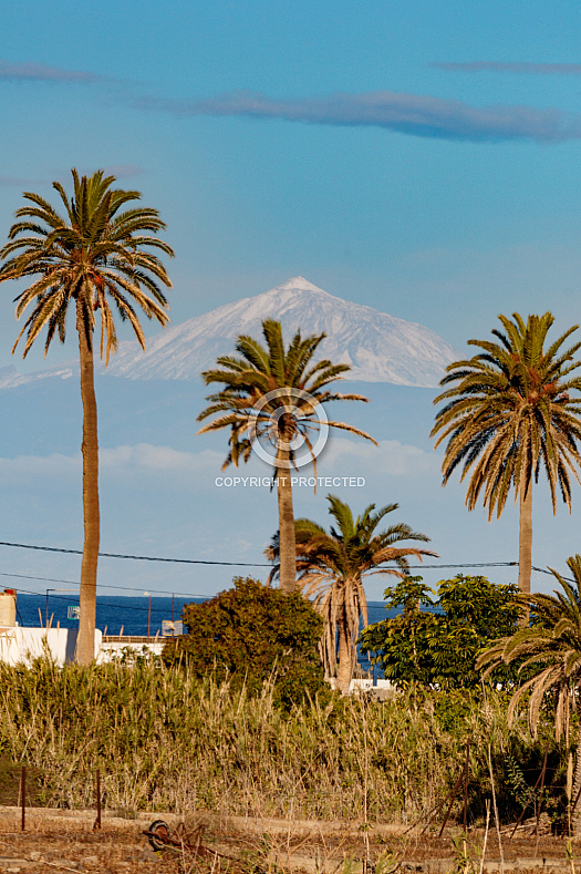 Snowcapped Teide (Tenerife) from Agaete