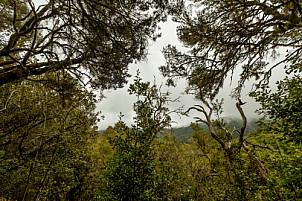 Barranco del Cedro - La Gomera