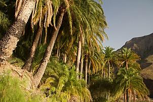 Sorrueda palms