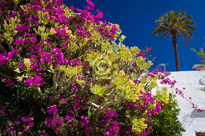 Flowers and palm tree in Santa Lucía