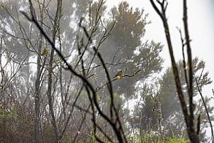 Garajonay - La Gomera