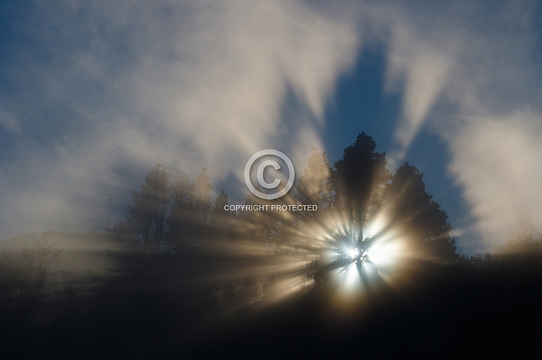 Sunset through fog and trees