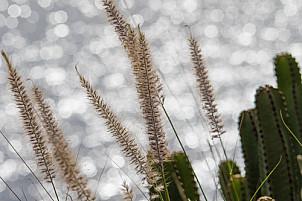 plants near sea