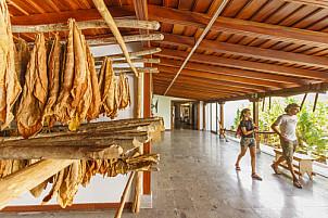 Museo del Puro Palmero La Palma