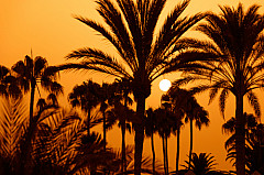 Sunset through palm trees