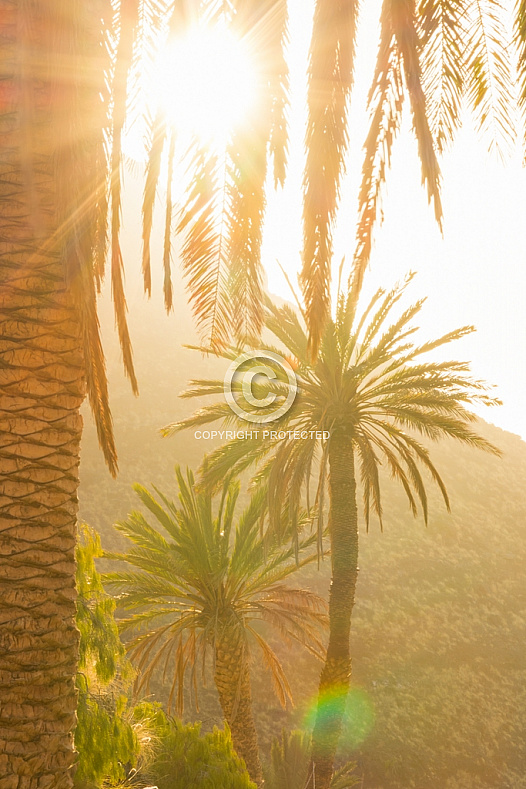 Sunset through the palms at Guayedra