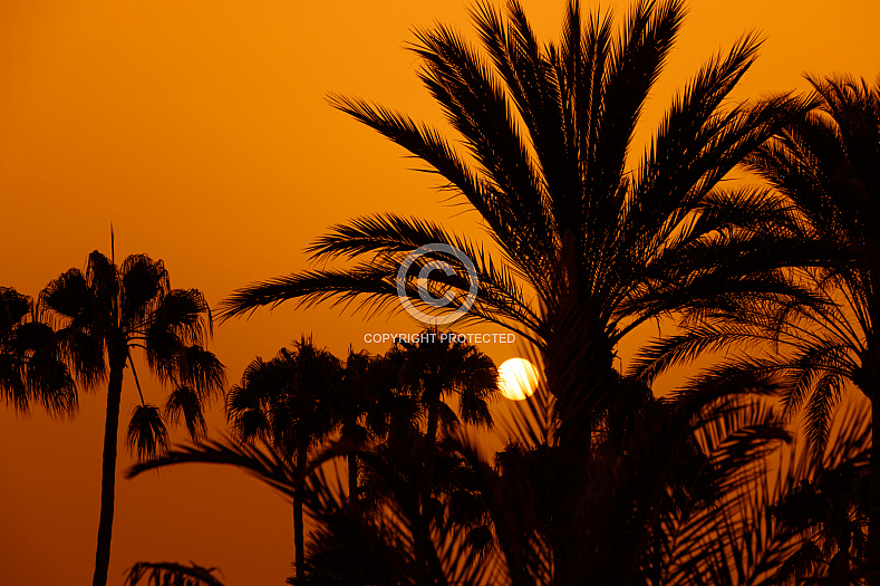 Sunset through palm trees